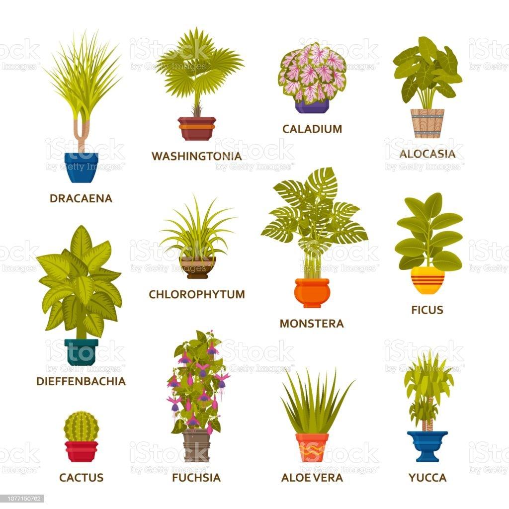 Dekorative Zimmerpflanzen In Töpfe Gesetzt Blumengeschäft ...