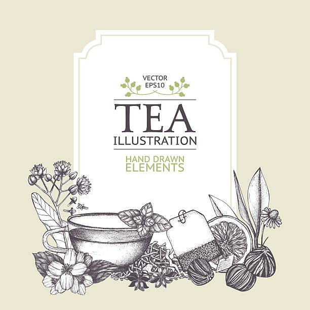 illustrazioni stock, clip art, cartoni animati e icone di tendenza di pastelli decorativo vintage sfondo con tè di schizzo. - camellia sinensis