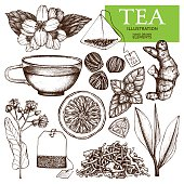 Vector collection of hand drawn tea illustration.