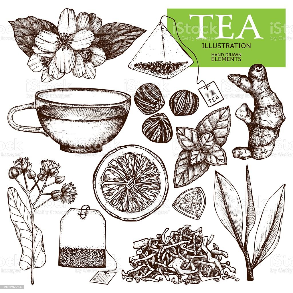 Decorative inking vintage tea sketch. vector art illustration