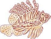 Decorative isolated poison lion fish