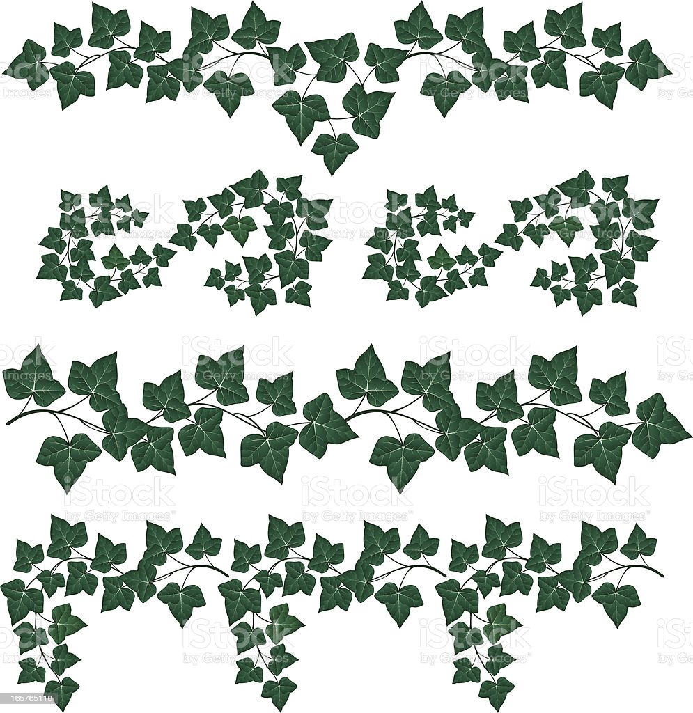 Decorative Ivy royalty-free stock vector art