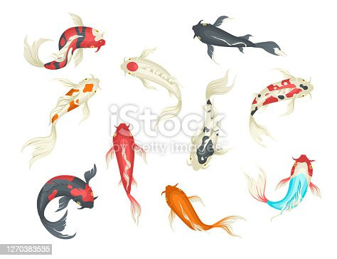 Koi fish set, flat vector illustration isolated on white background. Decorative fish japanese carp, top view. Symbol of luck, wealth.
