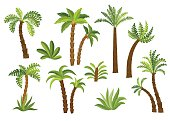 Decorative palm trees set.