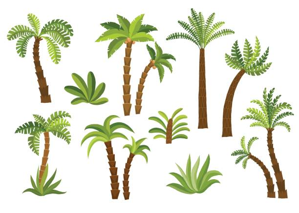 decorative palm trees set. - palm tree stock illustrations
