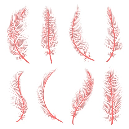Decorative pink feathers
