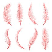 Decorative pink feathers. Exotic trendy coral feather set of flamingo or goose, vector illustration of decorative fluffy details of flying birds graphics isolated on white background