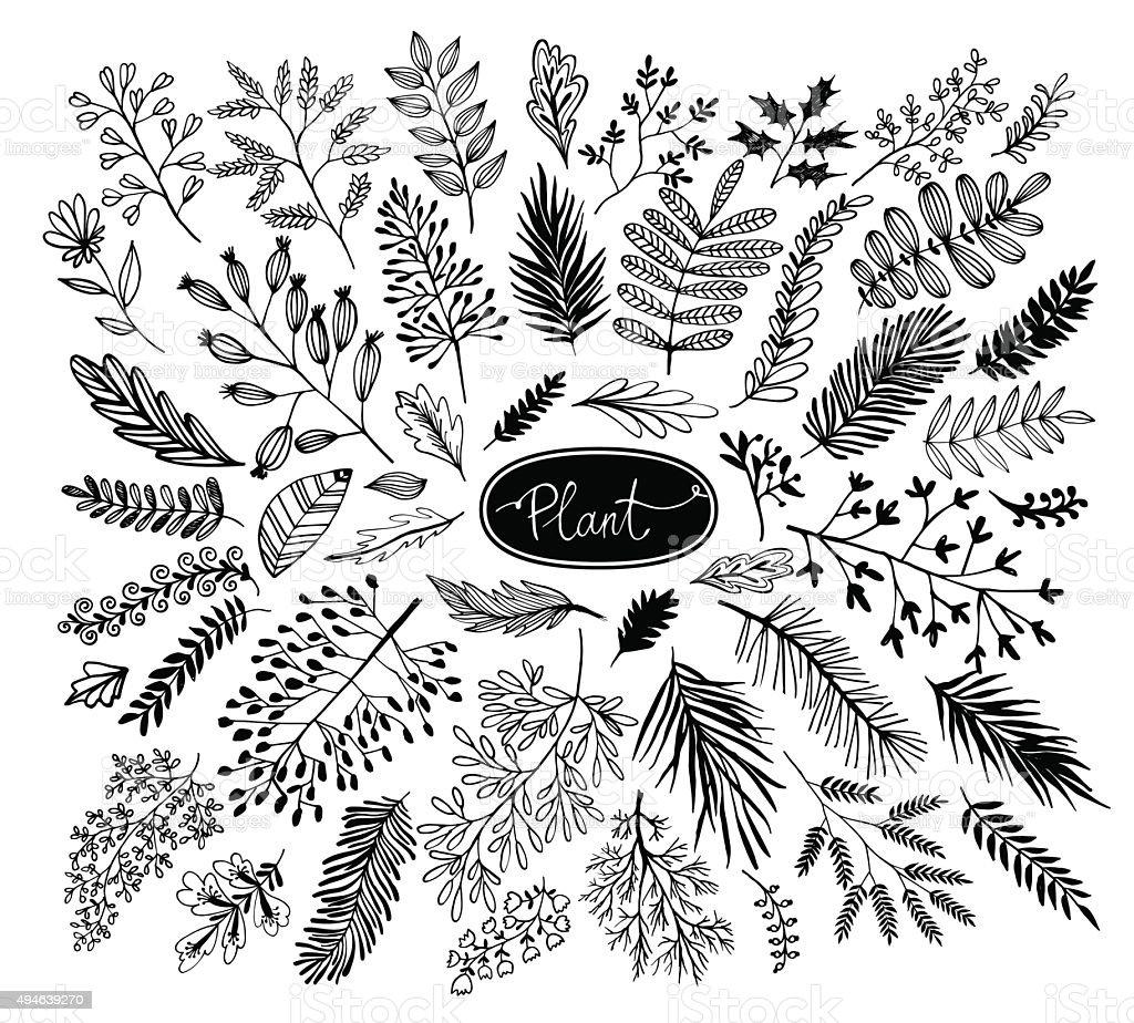 Decorative plants and flowers collection. Handvectorkunst illustratie