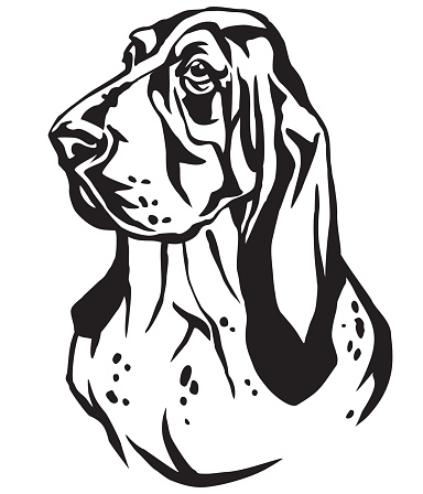 Decorative portrait of Basset Hound vector illustration
