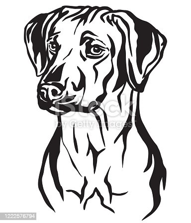 Decorative outline portrait of Rhodesian Ridgeback Dog looking in profile, vector illustration in black color isolated on white background. Image for design and tattoo.