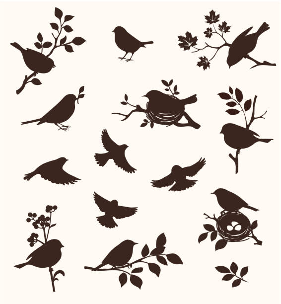 ilustrações de stock, clip art, desenhos animados e ícones de decorative set of spring bird and twig silhouettes, flying birds and on the nest. - pássaro