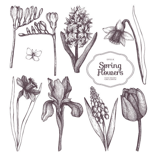 Decorative set with vintage flowers for greeting card or invitation Vector collection of hand drawn spring flowers sketch in pastel colors. iris plant stock illustrations