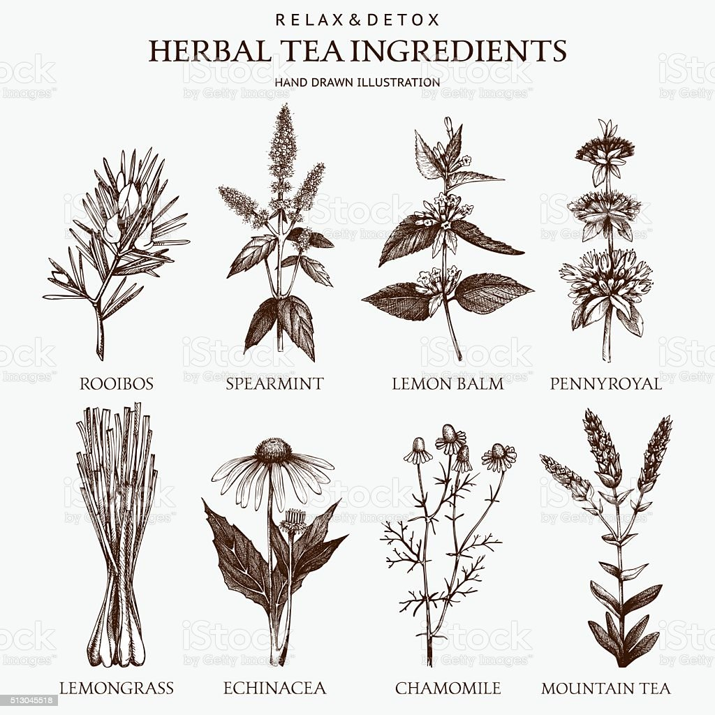 Decorative vector set of vintage herbs sketch vector art illustration