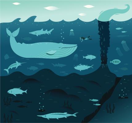 Deep Blue Whale