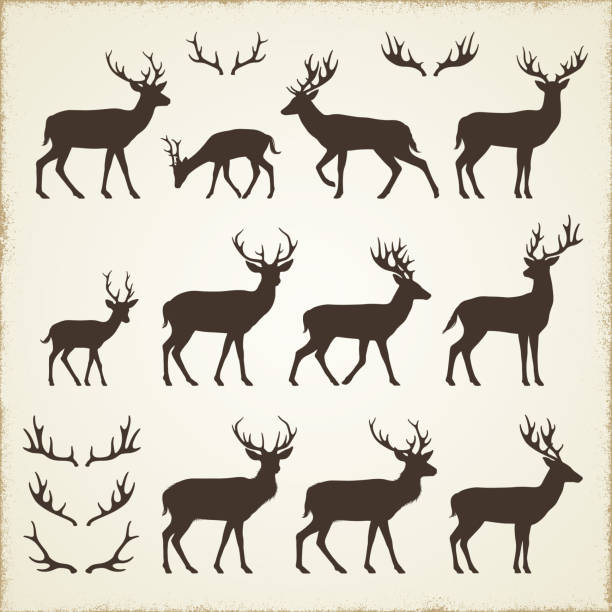 deer and antler silhouettes - reindeer stock illustrations