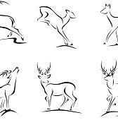 Deer and Buck Sketches