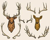 Deer and horns set.