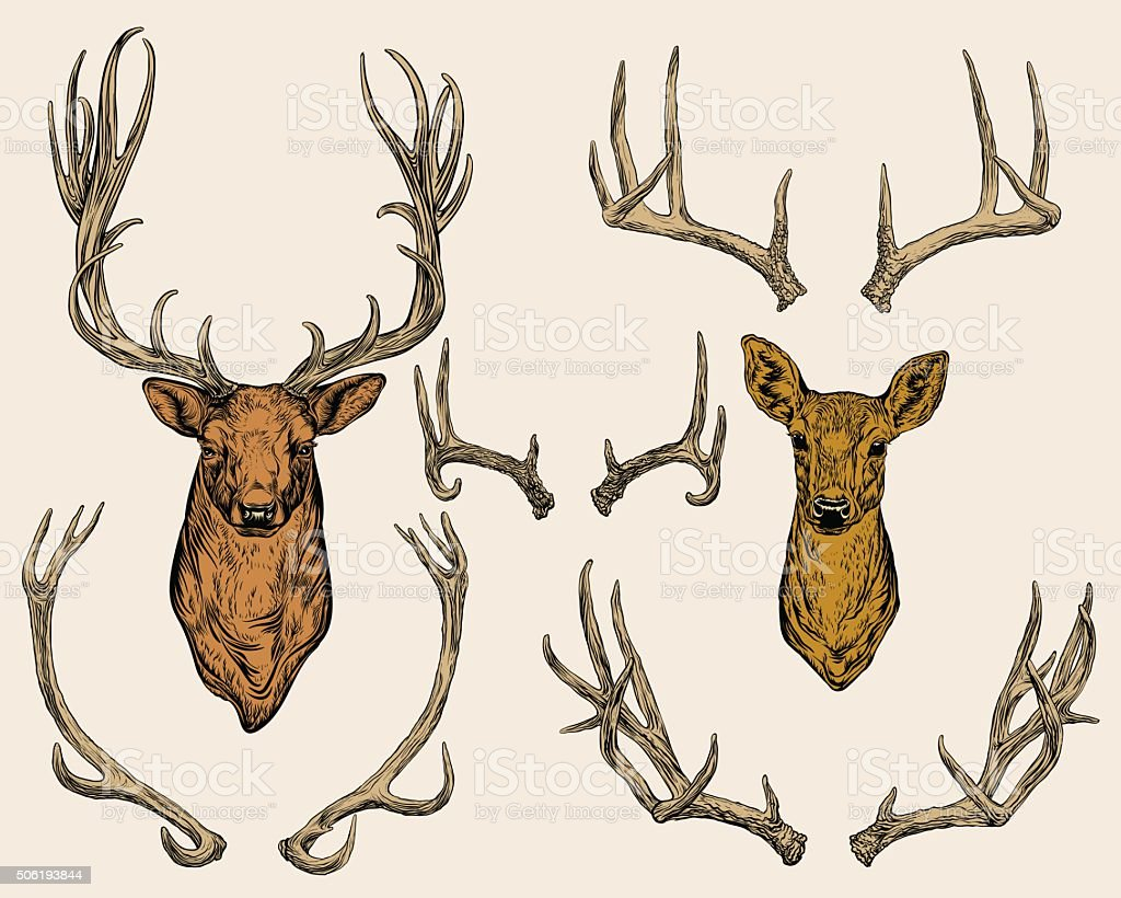 Deer and horns set. vector art illustration