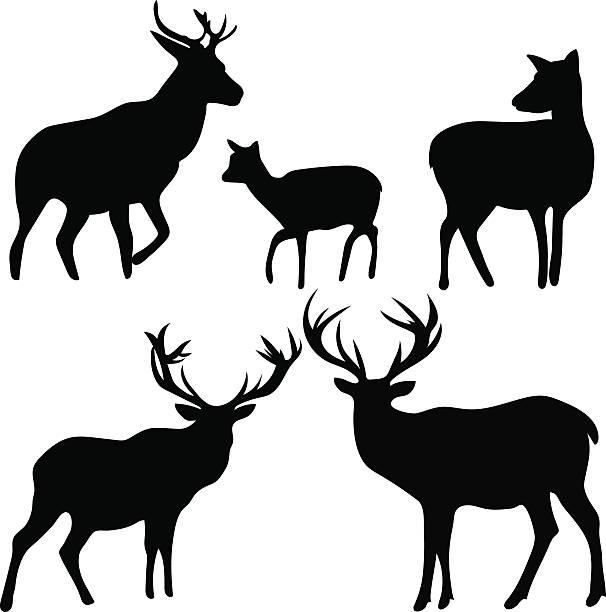 deer and roe silhouettes on the white background - bergziegen stock-grafiken, -clipart, -cartoons und -symbole