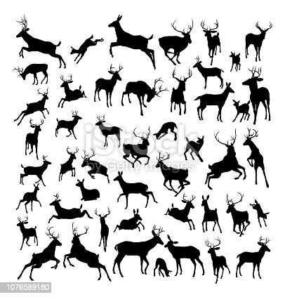 High quality deer silhouettes. Fawn, doe, bucks and stags in various poses.
