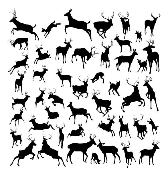 Deer animal silhouettes High quality deer silhouettes. Fawn, doe, bucks and stags in various poses. stag stock illustrations