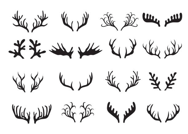 deer antlers set isolated on white background. - reindeer stock illustrations
