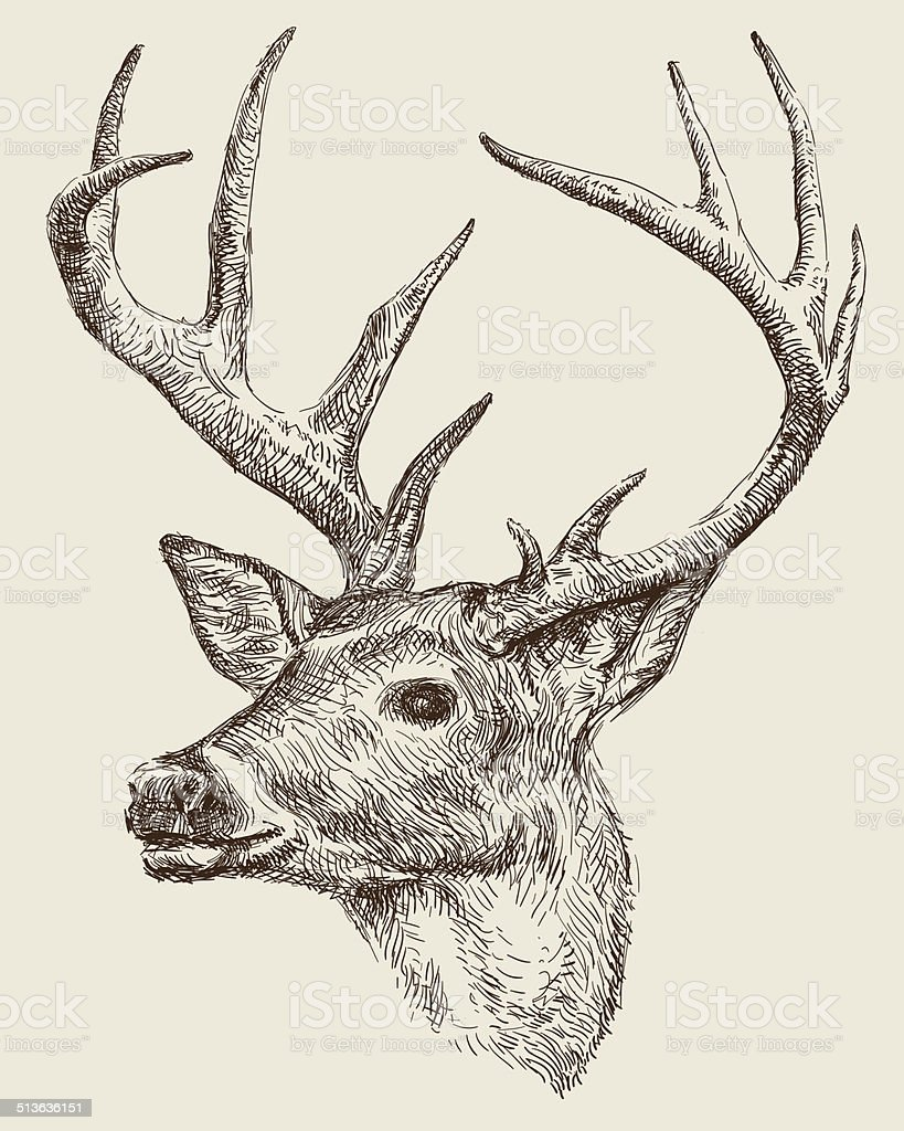 Deer Drawing Stock Vector Art & More Images of 19th Century ...