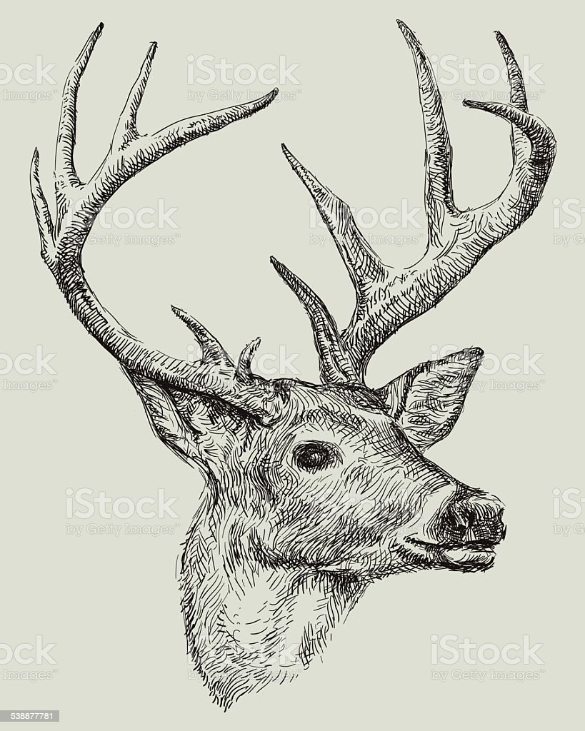 Deer drawing
