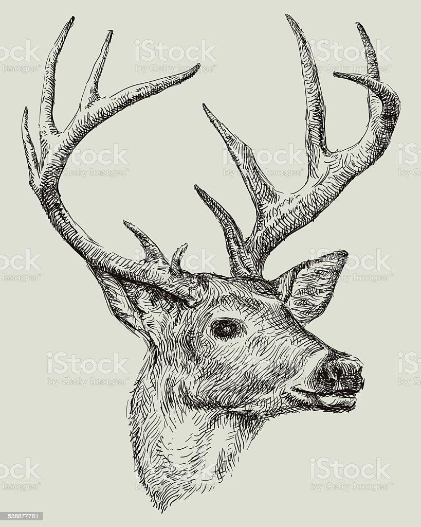 Deer drawing vector art illustration