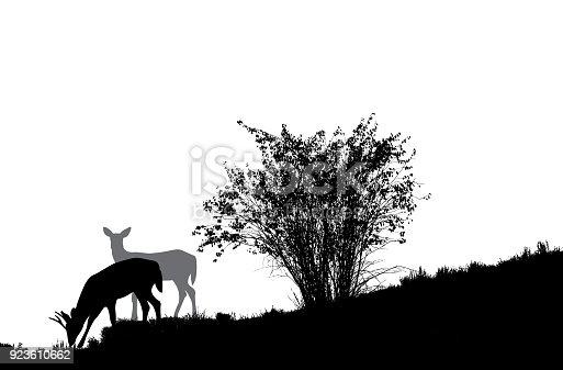 Deer male and female on a hillside