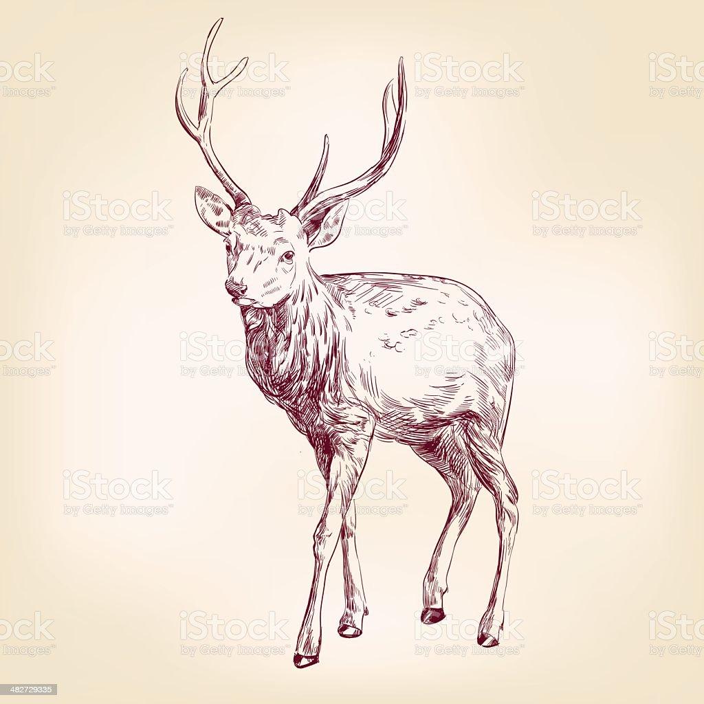 Vetores De Deer Mao Desenhada Llustration Desenho De Vetor