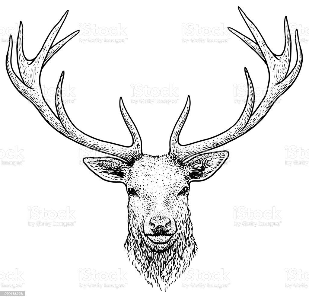Image De Art Deer And Drawing: Deer Head Illustration Drawing Engraving Ink Line Art