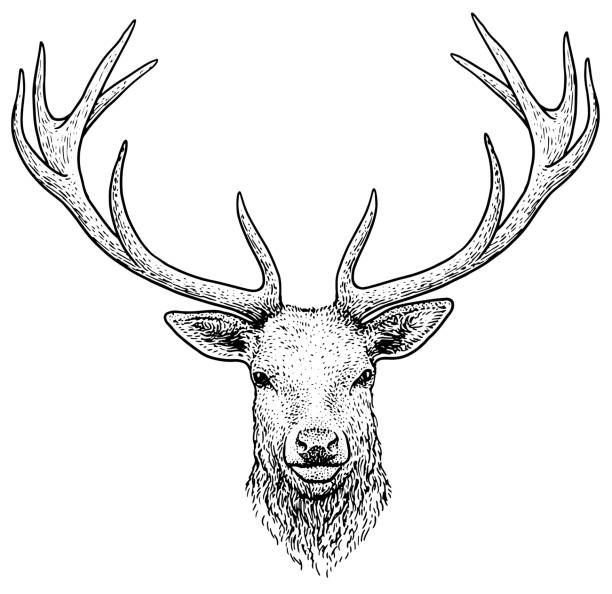 deer head illustration, drawing, engraving, ink, line art, vector - deer antlers stock illustrations, clip art, cartoons, & icons