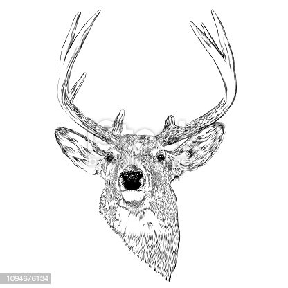 Deer Head Ink Vector Illustration in Engraving Style