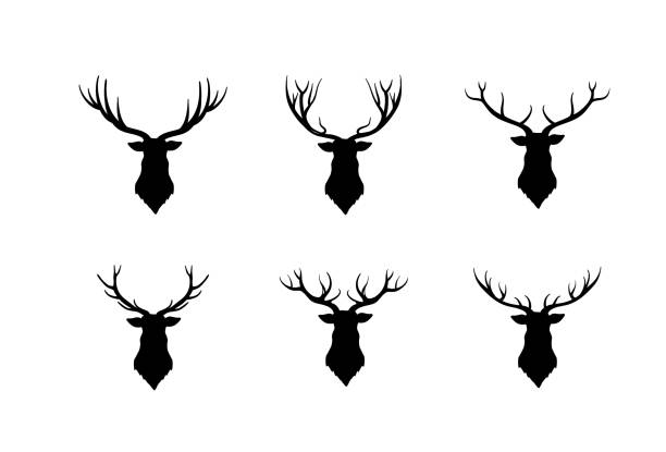 Deer head silhouette. Wild animal reindeer set vector art illustration