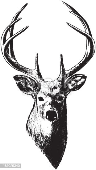 istock Deer Head (Vector) 165029340