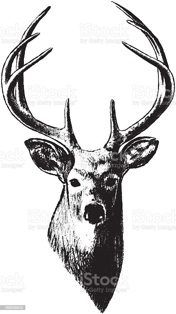 Deer Head (Vector) vector art illustration