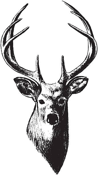 Deer Head Illustration Stock Illustration - Download Image ...