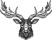 Hand drawn deer head.