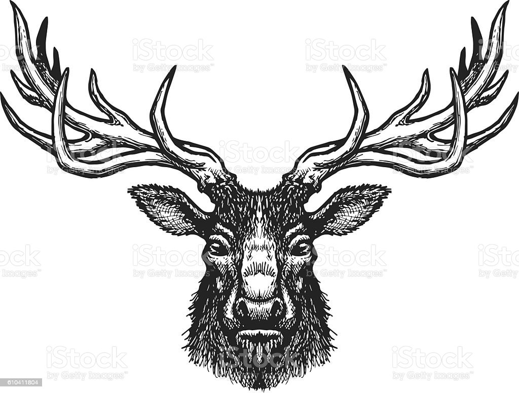 Deer head vector art illustration