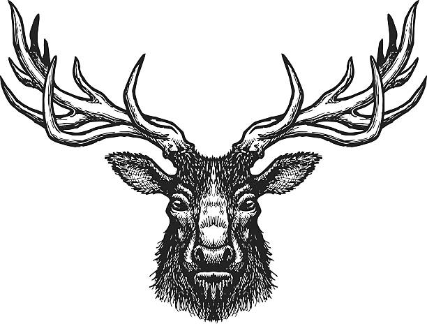 deer head - deer antlers stock illustrations, clip art, cartoons, & icons