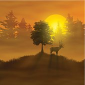 The deer in the misty forest with sunset on the horizon. Vector Illustration. EPS10 transparency effect, gradient mesh.