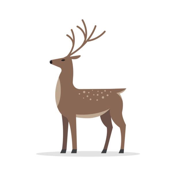 illustrations, cliparts, dessins animés et icônes de cerf mâle plat vecteur isolé sur fond blanc. - renne