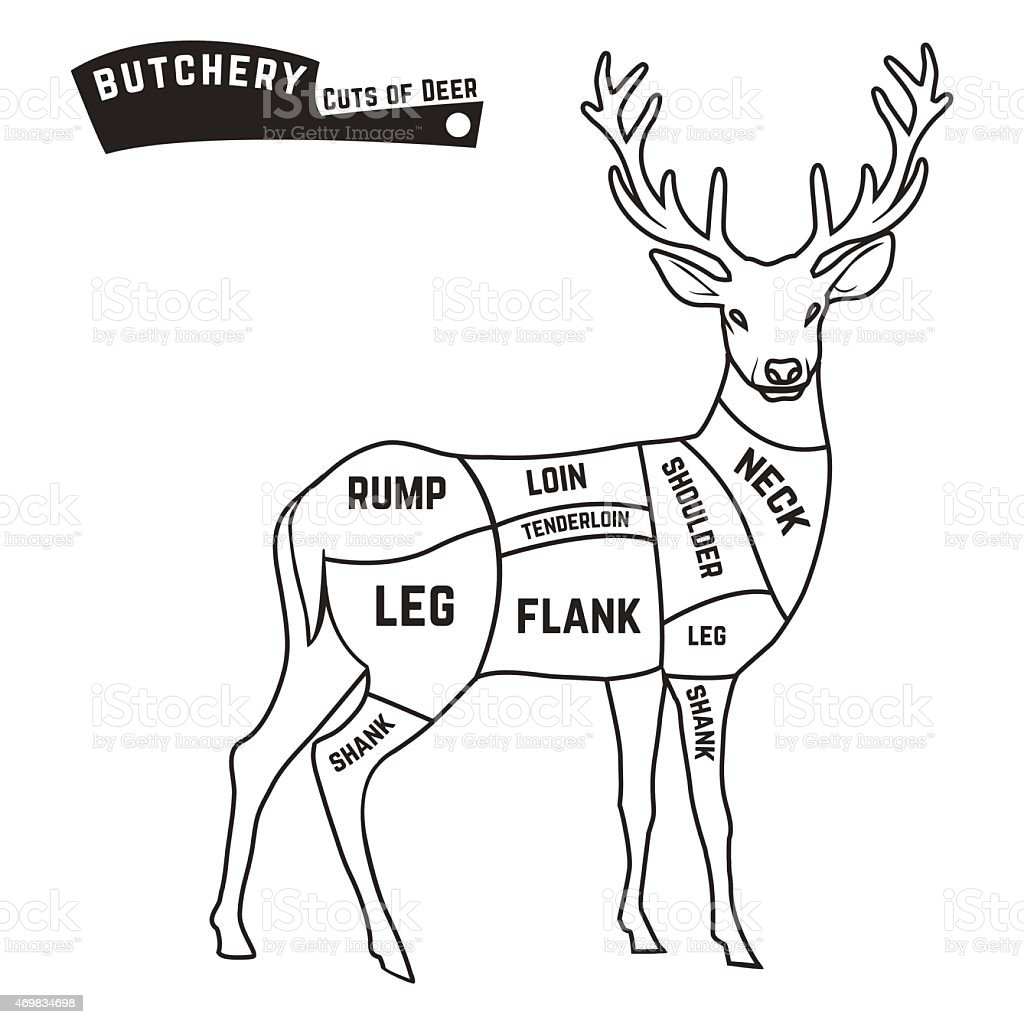 Deer Body Diagram House Wiring Diagram Symbols