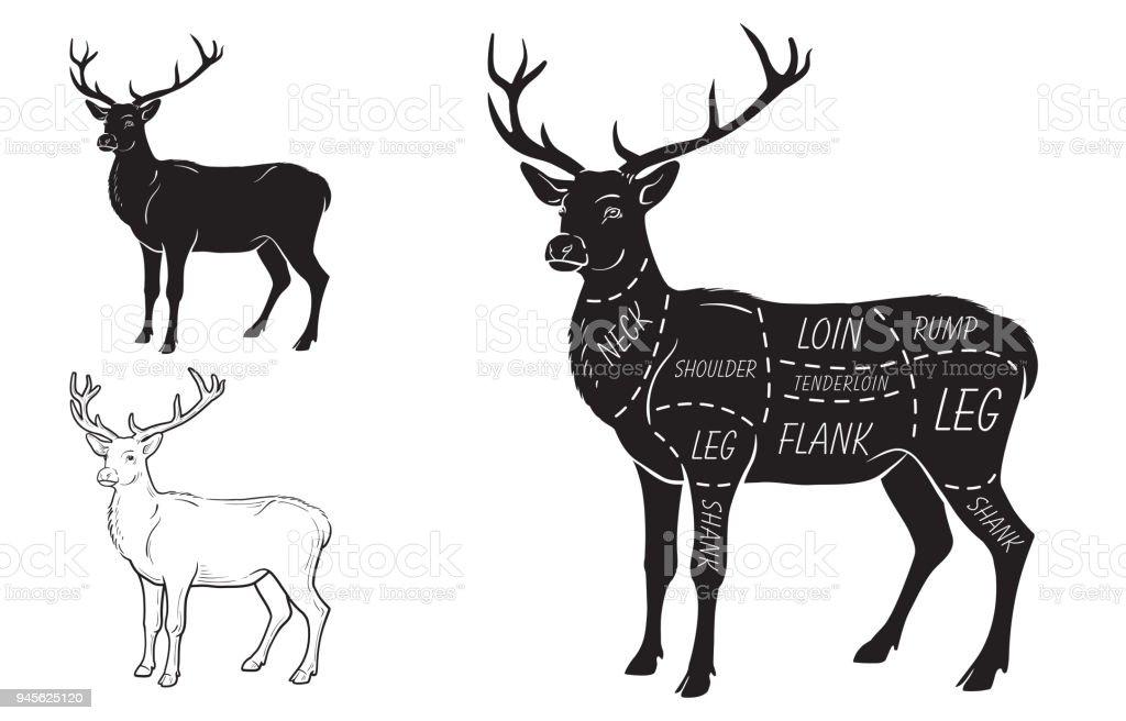 Ilustración de Cortes De Carne De Venado Con Elementos Y Nombres ...