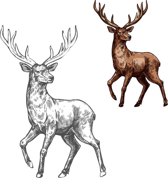 deer, reindeer or elk sketch of wild mammal animal - deer antlers stock illustrations, clip art, cartoons, & icons