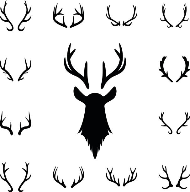 deer s head and antlers set. design elements of deer - reindeer stock illustrations