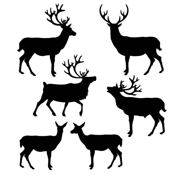 deer silhouette collection - reindeer stock illustrations