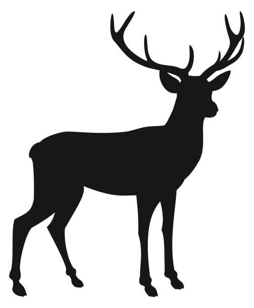 hirsch silhouette isoliert auf weißem hintergrund. vektor-illustration. - hirsch stock-grafiken, -clipart, -cartoons und -symbole