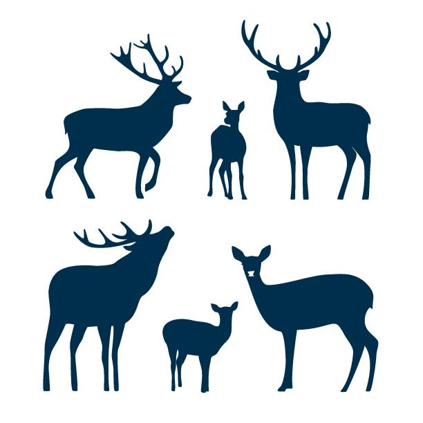 Deer silhouette set. Vector graphic Deer silhouette set. Vector graphic stag stock illustrations